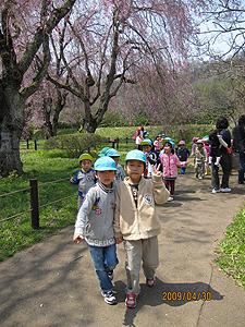 親子遠足の写真。桜の木の下を子供たちが歩いている。