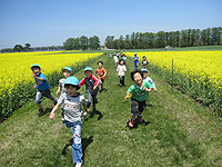 親子遠足:菜の花畑の間の道を子供たちが走っている