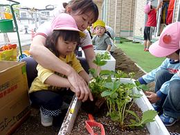 野菜を植えました